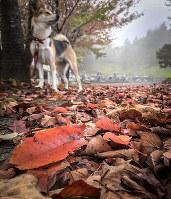 秋深し隣に寄り添う温もりを感じて今日もありがとうひとつ 短歌・白築純、撮影・Ken.Funatsu