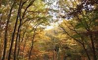 紅葉が美しいアファンの森=C.W.ニコル・アファンの森財団提供