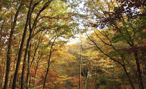 Autumn foliage is seen in the Afan Woodlands. (Photo courtesy of the C. W. Nicol Afan Woodland Trust)