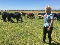 In this July 11, 2018 photo, animal geneticist Alison Van Eenennaam of the University of California, Davis, points to a group of dairy calves that won't have to be de-horned thanks to gene editing. (AP Photo/Haven Daley)