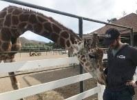 11月14日、米カリフォルニア州マリブ地区で発生している山林火災により壊滅した動物公園で、キリンの「スタンレー」(写真)をはじめ140匹余りの動物たちが無事火災を乗り切っていたことが分かった。13日撮影(2018年 ロイター/Dana Feldman)