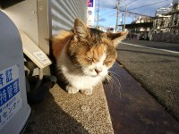 気持ち良さそうにひなたぼっこ。右奥はJR尾道駅=広島県尾道市東御所町で2017年11月19日午後3時36分、渕脇直樹撮影