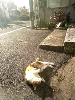 今年5月11日、JR尾道駅の駐車場で涼む=尾道市東御所町で2018年5月11日午後3時50分、渕脇直樹撮影