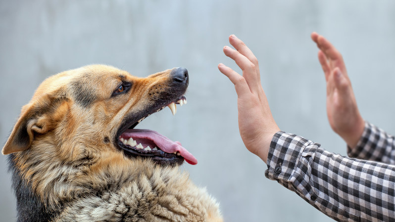 最強の感染症」狂犬病のリスクはイヌだけじゃない | 旅と病の歴史地図 ...