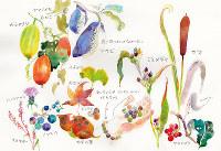 「小さい秋」 絵・スケノアズサ