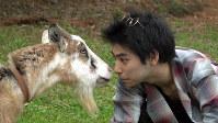 <プロフィル>村上虹郎(むらかみ・にじろう)1997年東京都出まれ。俳優の父・村上淳とミュージシャンの母・UAの間に生まれる。神奈川県にあるシュタイナー学園に学び、その後沖縄移住を経てカナダへ留学。留学中に誘われた映画「2つ目の窓」(河瀬直美監督・2014年公開)で俳優デビュー。2017年公開の映画「武曲 MUKOKU」(熊切和嘉監督)で第41回日本アカデミー賞優秀助演男優賞。今月公開の主演映画「銃」では父・村上淳との共演が話題に。2019年には映画「チワワちゃん」、舞台「ハムレット」が控えている。動物が大好きで、特に大型犬が好き。理想は「自然のなかで一緒に住むこと」。