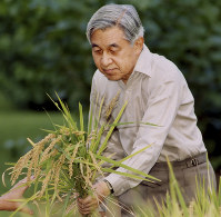 In this Sept. 26, 2005, file photo, provided by the Imperial Household Agency of Japan, Japanese Emperor Akihito uses a sickle to reap rice grown at a paddy field in the compound of the Imperial Palace in Tokyo. (Imperial Household Agency of Japan via AP)