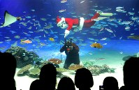 サンタクロースやトナカイにふんしたダイバーの水中パフォーマンスが人気の「サンタダイブ」=東京都豊島区で2018年11月13日、宮武祐希撮影