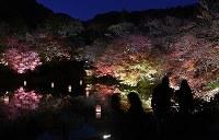ライトアップされ水面に映る姿が幻想的な光景を演出する御船山楽園の紅葉=佐賀県武雄市で2018年11月20日、矢頭智剛撮影