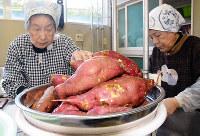白丸公民館での干しいも作りで使われた地元産のサツマイモ=石川県能登町白丸で、石川将来撮影