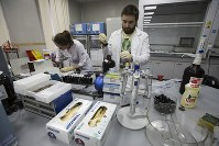 In this May 24, 2016, file photo, lab technicians work at Russia's national drug-testing laboratory in Moscow, Russia. (AP Photo/Alexander Zemlianichenko)