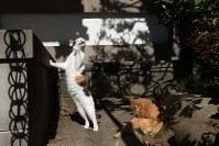 =「残念すぎるネコ」より(c)Masayuki Oki