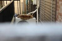 エアコンの室外機の上で寝ている猫。沖さんは細い路地の奥も見逃さない=東京都内で岡本同世撮影