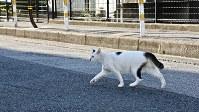 「はい!今!撮る!」。沖さんの指導を受けて猫撮影に挑戦した=東京都内で岡本同世撮影