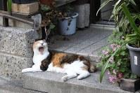 「あくび撮れましたか」=東京都内で岡本同世撮影