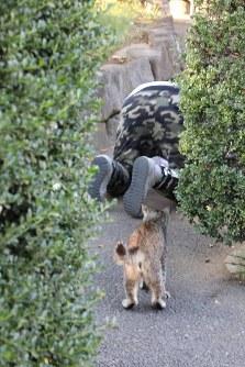 撮影する沖さんを見守る猫。ぶれて残念すぎる=東京都内で岡本同世撮影