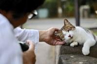 「ほんまにかわいいなあ」=東京都内で岡本同世撮影