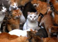 関西写真記者協会部門賞・企画部門銀賞を獲得した「インサイト~命を見つめる」(5枚組み)から、猫の島「青島」で暮らす猫たち。カットされた片耳は不妊去勢手術が施されたことを示す=愛媛県大洲市で2018年10月22日、久保玲撮影