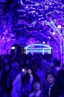 青色LEDでライトアップされたケヤキ並木=東京都渋谷区の代々木公園で2018年11月30日、宮武祐希撮影