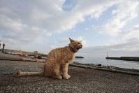 新しくなった猫の家の前で大あくび=伊勢湾の小さな漁港で2018年12月2日午前8時30分、山口政宣撮影