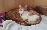 """新しくなった猫の家の一番小さい""""住人""""。台風の前日に捨てられているのを平林さんが見つけた=伊勢湾の小さな漁港で2018年12月2日午前8時37分、山口政宣撮影"""