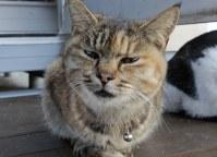 """新しくなった猫の家の""""住人""""。近寄ると不機嫌になった=伊勢湾の小さな漁港で2018年12月2日午前8時42分、山口政宣撮影"""