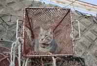 """新しくなった猫の家の""""住人""""。辺りを偵察している=伊勢湾の小さな漁港で2018年12月2日午前8時46分、山口政宣撮影"""
