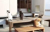 新しくなった猫の家の入り口。ひなたぼっこしている=伊勢湾の小さな漁港で2018年12月2日午前8時51分、山口政宣撮影