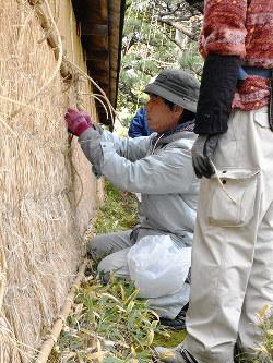 土塀に薦(こも)をつける職人たち=金沢市長町2で、日向梓撮影