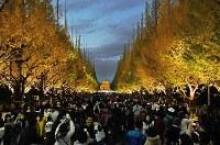 Gingko trees at Meiji Jingu Gaien park are seen lit up in Tokyo's Minato Ward, on Nov. 23, 2018. (Mainichi/Toshiki Miyama)