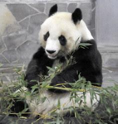 神戸市立王子動物園で飼育されているタンタン。2020年7月には貸与期限を迎える=神戸市灘区で2018年10月22日午後3時25分、峰本浩二撮影