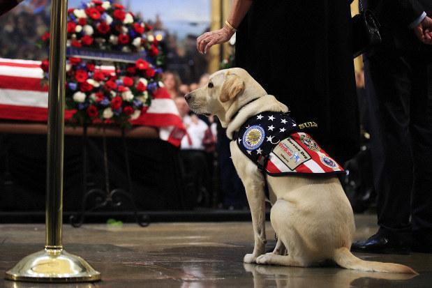 Good boy: Sully the service dog visits Bush's casket - The Mainichi