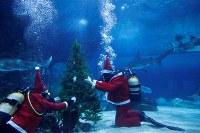 12月7日、ハンガリーの首都ブダペストの水族館「トロピカリウム」で、7頭のサメなどの魚たちに、サンタクロースに扮(ふん)したダイバーらが貝で飾り付けたクリスマスツリーを届けた。6日撮影(2018年 ロイター/BERNADETT SZABO)
