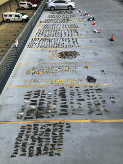 This Nov. 28, 2018 photo provided by the United States Attorney's Office and introduced as evidence in court in Honolulu shows some of the hundreds of shark fins seized from a Japanese fishing boat. (U.S. Attorney's Office via AP)
