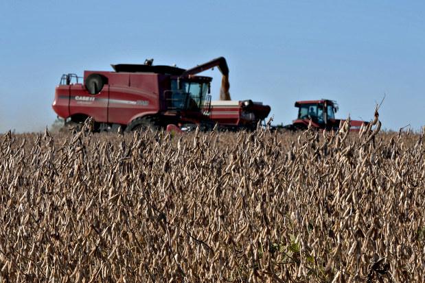 世界経済総予測2019:穀物 中国の大豆消費1億トン超 輸入先転換で交渉 ...