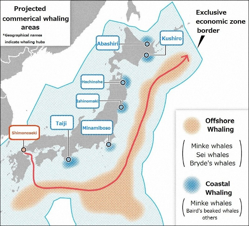 Japan to resume commercial whale hunting, announces withdrawal from IWC