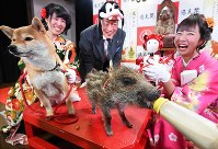 A dog and a baby wild boar are seen together at Tsutenkaku Tower in Osaka's Naniwa Ward on Dec. 27, 2018, for an event marking the change from the Chinese zodiac's Year of the Dog in 2018 to the Year of the Wild Boar in 2019. (Mainichi/Kazuki Yamazaki)