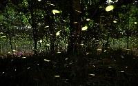 乱舞するヒメボタル=大阪府吹田市の千里緑地で2018年5月24日、三村政司撮影(午後8時25分から同9時42分の間に撮影した70枚を合成)