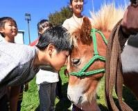 避難所生活が長引く中、動物と触れ合うことでストレスを減らそうとボランティアで連れてこられたポニー。「何考えているんだろう」と話し、子どもが額を合わせた=北海道厚真町で2018年9月11日、山崎一輝撮影