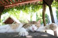 炎天下の公園の日陰で休む猫。野良だったのを地域住民が費用を負担し、去勢手術をした「地域猫」だという。有志が持ち回りで餌やりなどの世話をしているという=東京都港区で2018年7月31日、宮武祐希撮影