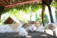 A community cat that used to be a stray sleeps under the sunshade in the heat at a park in Tokyo's Minato Ward, on July 31, 2018. Local residents paid to get the cat neutered and now take care of it. (Mainichi/Yuki Miyatake)