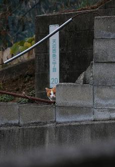 注意深そうにこちらの様子をうかがうネコ=広島県呉市で2018年12月24日、小出洋平撮影