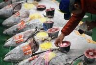 豊洲市場で初めて行われる初競りを前に、マグロを見て回る市場関係者ら=東京都江東区で2019年1月5日午前5時22分、玉城達郎撮影
