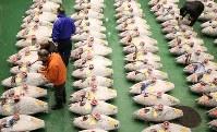 豊洲市場で初めて行われる初競りを前に、マグロを見て回る市場関係者ら=東京都江東区で2019年1月5日午前4時55分、玉城達郎撮影