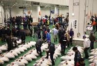 豊洲市場開場後、初となる初競りが行われたマグロ卸売場=東京都江東区で2019年1月5日午前5時29分、玉城達郎撮影