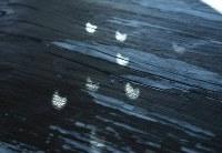 白い紙に開けた小穴を太陽の光にかざすと、影が欠けた太陽の形になった=埼玉県深谷市で2019年1月6日午前10時4分、手塚耕一郎撮影
