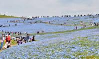 茨城県ひたちなか市の国営ひたち海浜公園=2017年4月22日、藤井達也撮影
