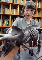 トリケラトプスの模型を前に、研究の内容を語る坂上莉奈さん=福井県永平寺町の福井県立大で、大森治幸撮影