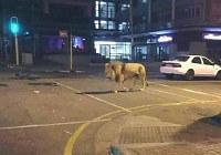 Twitterに投稿されたデマ写真「熊本地震でライオン脱走」
