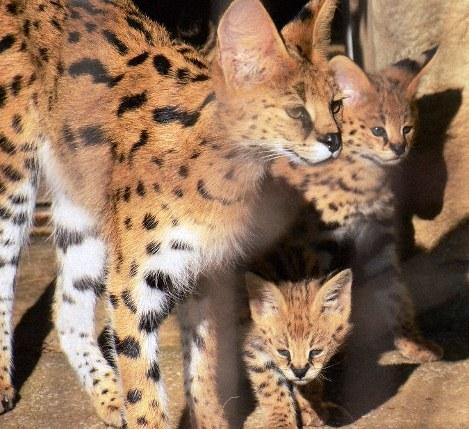 Photo Journal: Hello kitties